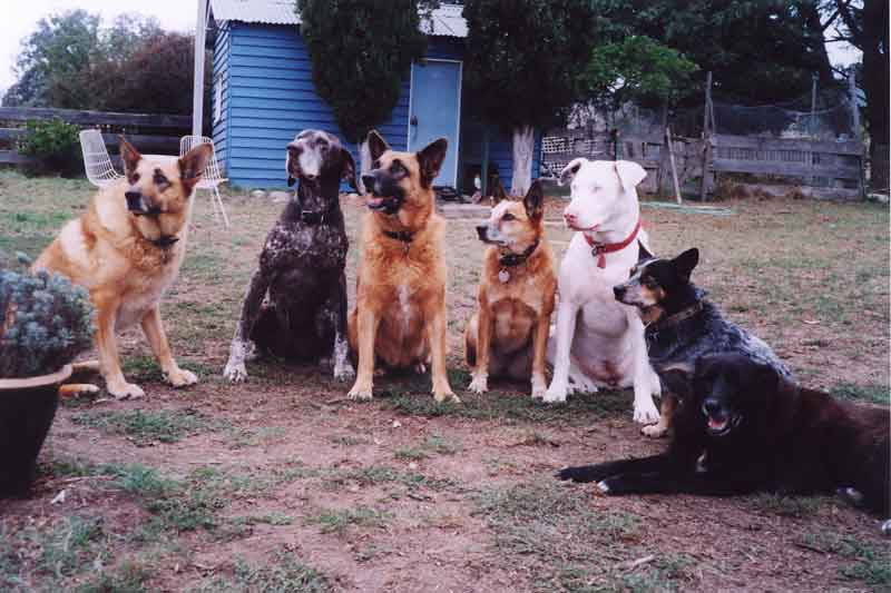 "The dogs from ""7 Days with 7 Dogs"""