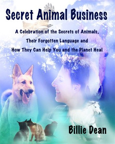 Secret Animal Business front cover