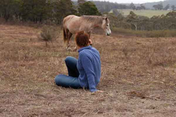 Billie Dean and Finnian the brumby