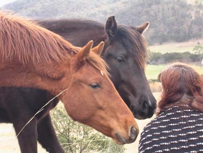 Student with wild brumbies