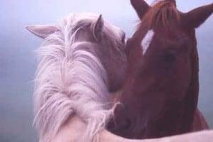Divine Love Healing Circle – July 30, 2011