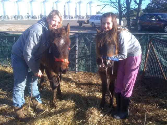 Two Rescued Jeparit Ponies