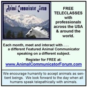 Animal Communicator Forum